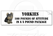 Yorkies, dogs and animals!  / by Vicki N