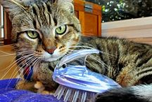 Cats / by Liz Stern