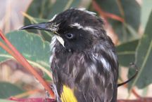 Wildlife at Elm Cottage / Bring along your camera as photographers and artists delight in capturing on film and canvas the beauty of the river, rural surrounds and the diverse wildlife.  http://www.elmcottage.com.au/default.htm