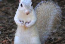 Tupai squirrel's