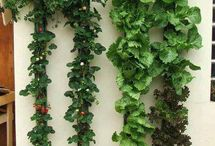 GARDEN / Vertical Plants herb gardens inspiration and research