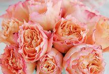 FLOWES (λουλούδια)