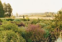 south african grass gardens