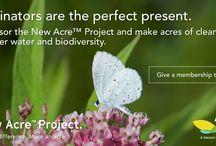 Make a New Acre