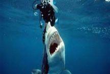 Photography - underwater