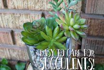 DIY Succulent Crafts & Ideas