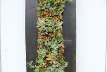 DIY Succulent  Living wall