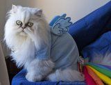 Costura para mascotas
