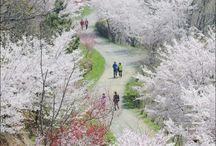 Corée printemps