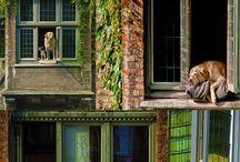 Dogs in Bruges