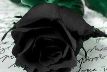 Αποστολη λουλουδιων / Αποστολή λουλουδιών | online ανθοπωλείο | στείλε λουλουδια | λουλουδια αποστολη | ανθοπωλείο | ανθοπωλεία | αυθημερόν παράδοση λουλουδιών | στείλε λουλούδια | on line flower shop in Greece and Athens