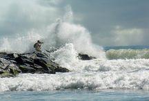 Sand, Shells, Sun, and Surf