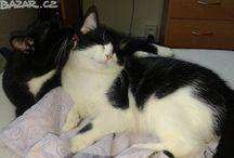 cats for farmhouse