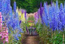 flower n garden idea / by Teresa Self