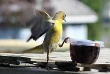 Birds and Butterflies / by Nancy Farr