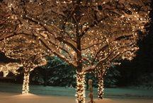 Winter twinkles
