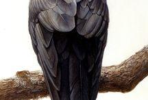 birds / tattoo insp.