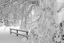 winter scene / by Rhonda Medford