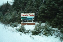 Home Is Where The Heart Is / My hometown of Heart's Desire & beautiful Newfoundland / by Maggie Langer