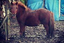 pony's & paarden