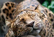 Nature,love animals / by Samanata Thapa