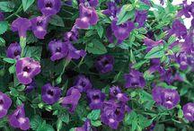 The Color - Violet