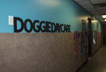 Dog Boarding Kennels and Daycares