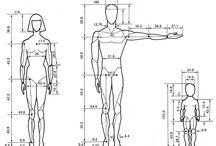 Тело - пропорции