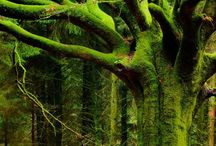 TrEEhuGGeR / by VinTaGe MaMa