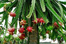 rare plants for flower