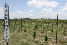Vineyard Life