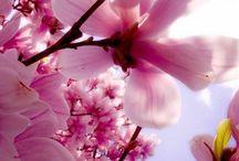 Vokes 8 Flowers / Valokuvia kukista