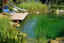 Rybníky