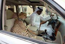 DUBAI ***