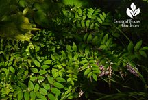 Shade plants / Beautiful plants for the shady garden