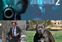 Animals and pets on movie's