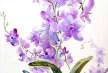 lila paarse bloemen