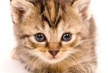 """Pets /  """"An animal's eyes have the power to speak a great language."""""""
