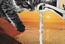 cat colage