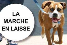 Tutoriels éducation canine