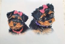 Tilly & Lacey, 2yr old yorkie sisters same litter
