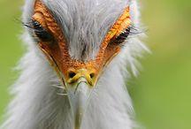 Birds- Raptors