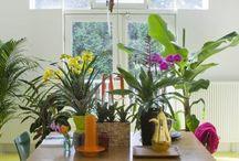 Pot&Plant