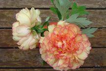 i miei fiori e animali / i fiori del mio giardino, di casa e gli animali che girano nel giardino