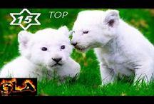 Top 15 Albino Animals in the World NEW 2017