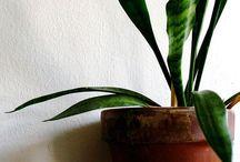 My Plants / by Courtney Kerr