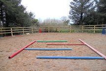 Horses - Work & Play