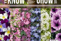 Gardening - Annuals