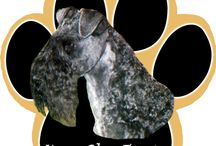 Kerry Blue Terrier  / Kerry Blue Terrier Memorabilia