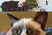 grumpy cat / by Monica Mindel